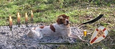 PRESENTATION D UN LION RASTA Dogsol2p